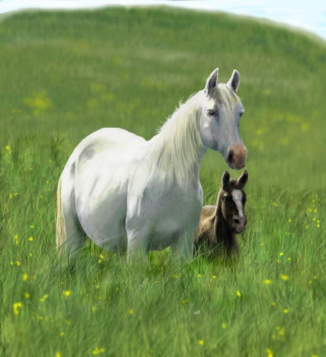 Konji - Page 2 Veliki_i_mali_konj